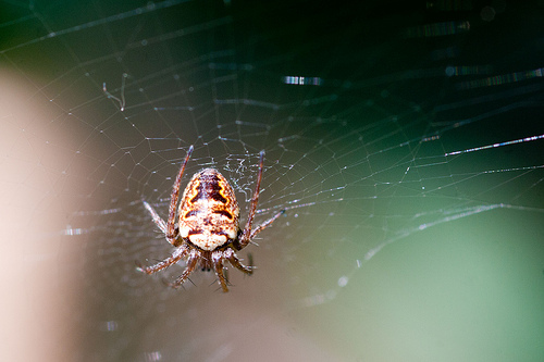 IMG_11046 Spinne_a