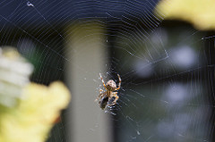 IMG_14295 Spinne_a