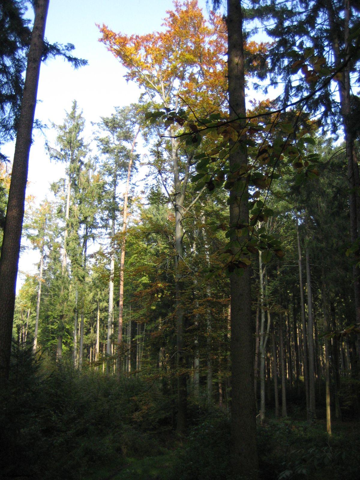 Herbst im Stadtwald