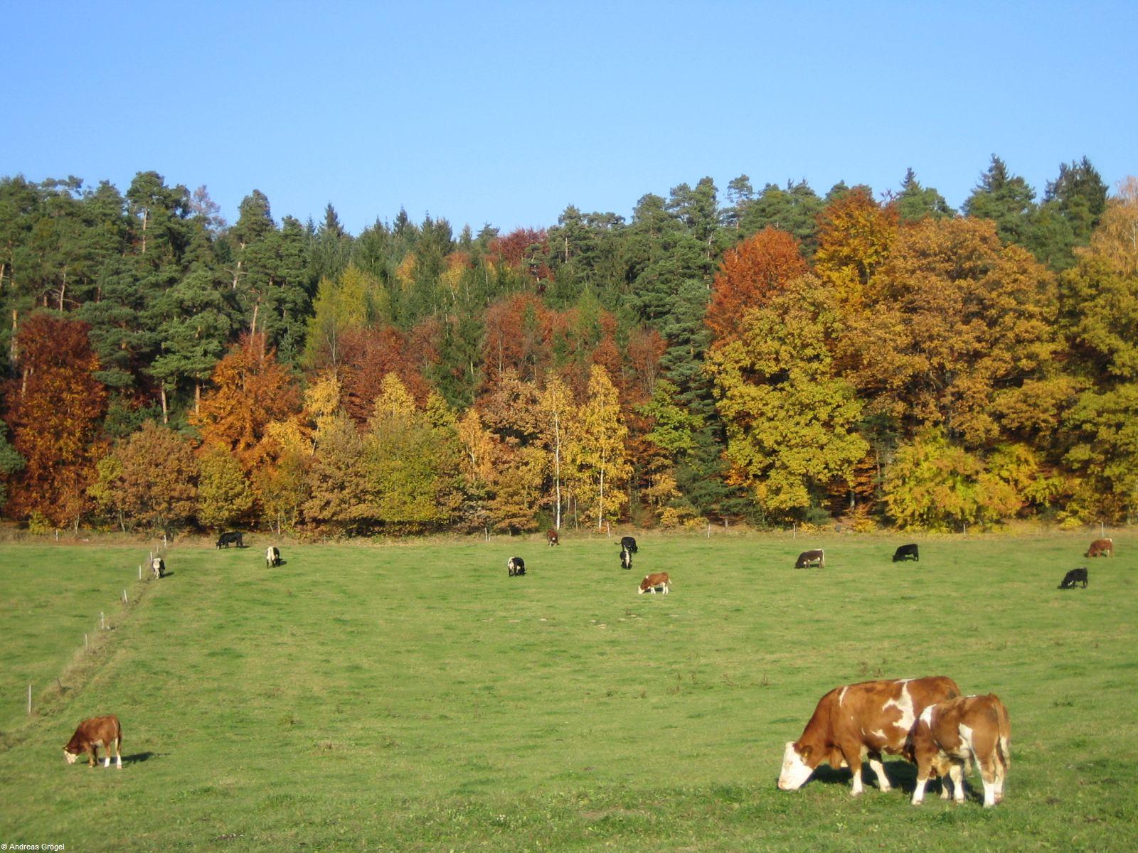 Herbst 2007 2