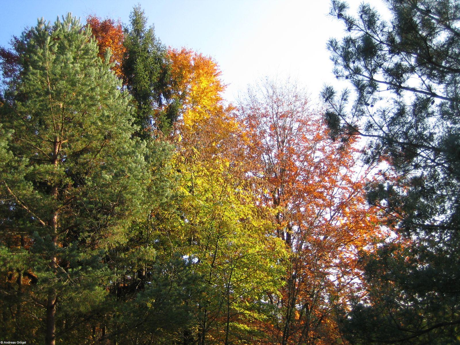 Herbst 2007 4