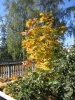 Autumn 2007 1