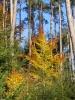 Autumn 2007 5