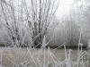 Hoar-frost 1