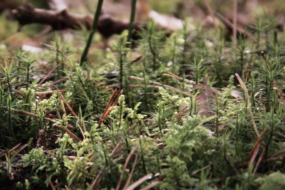 44: Ich glaub, ich steh im Wald