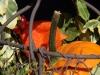 40: Goldener Herbst (1)