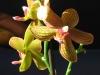 07: Blütenpracht