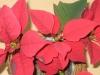 09: Die Farbe Rot