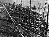 Tunguska-Ereignis: Bäume