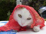 Katze mit Schleier