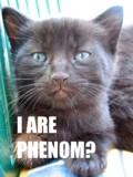 I Are Phenom?