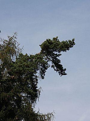 T-Rex-Baum