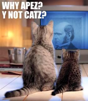 Why Apez? Y not Catz?
