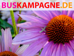 buskampagne_motiv3_large