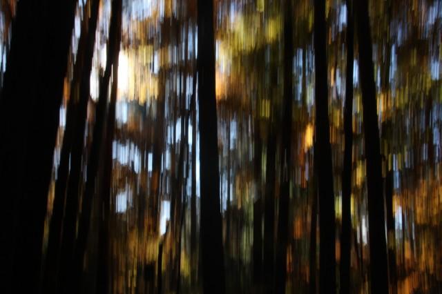 Panning im Wald