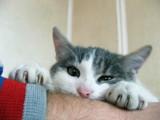 Katze am Arm