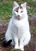sitzende Katz