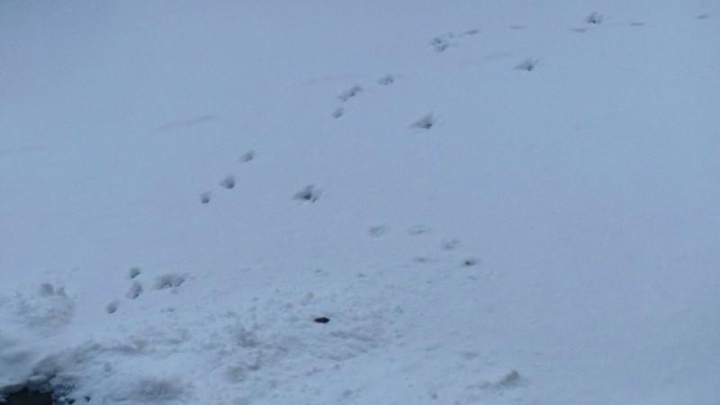 Katzenspuren im Schnee