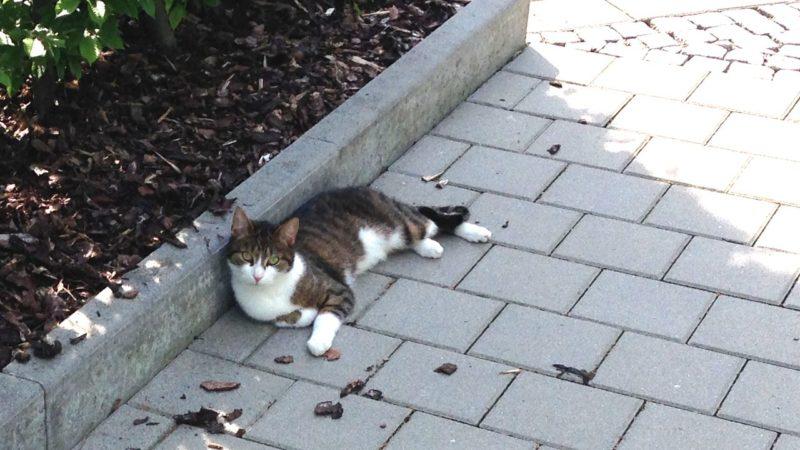 liegende-katze